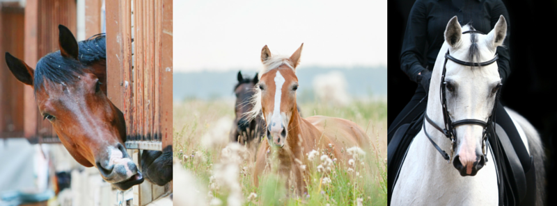 Kultreiter Pferdeblog