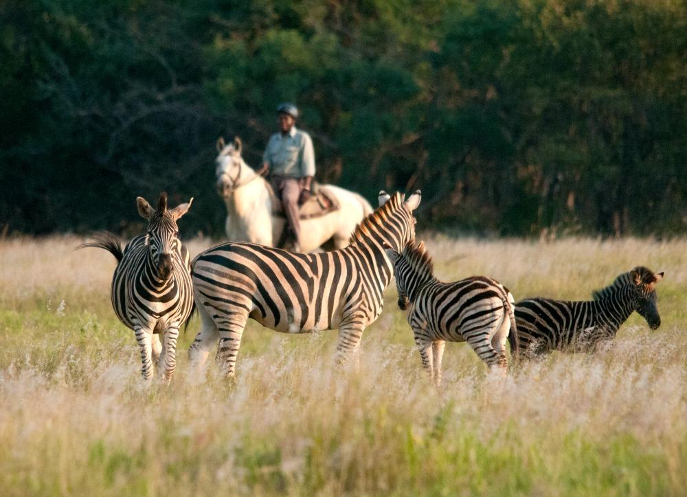 Pferdesafari Südafrika