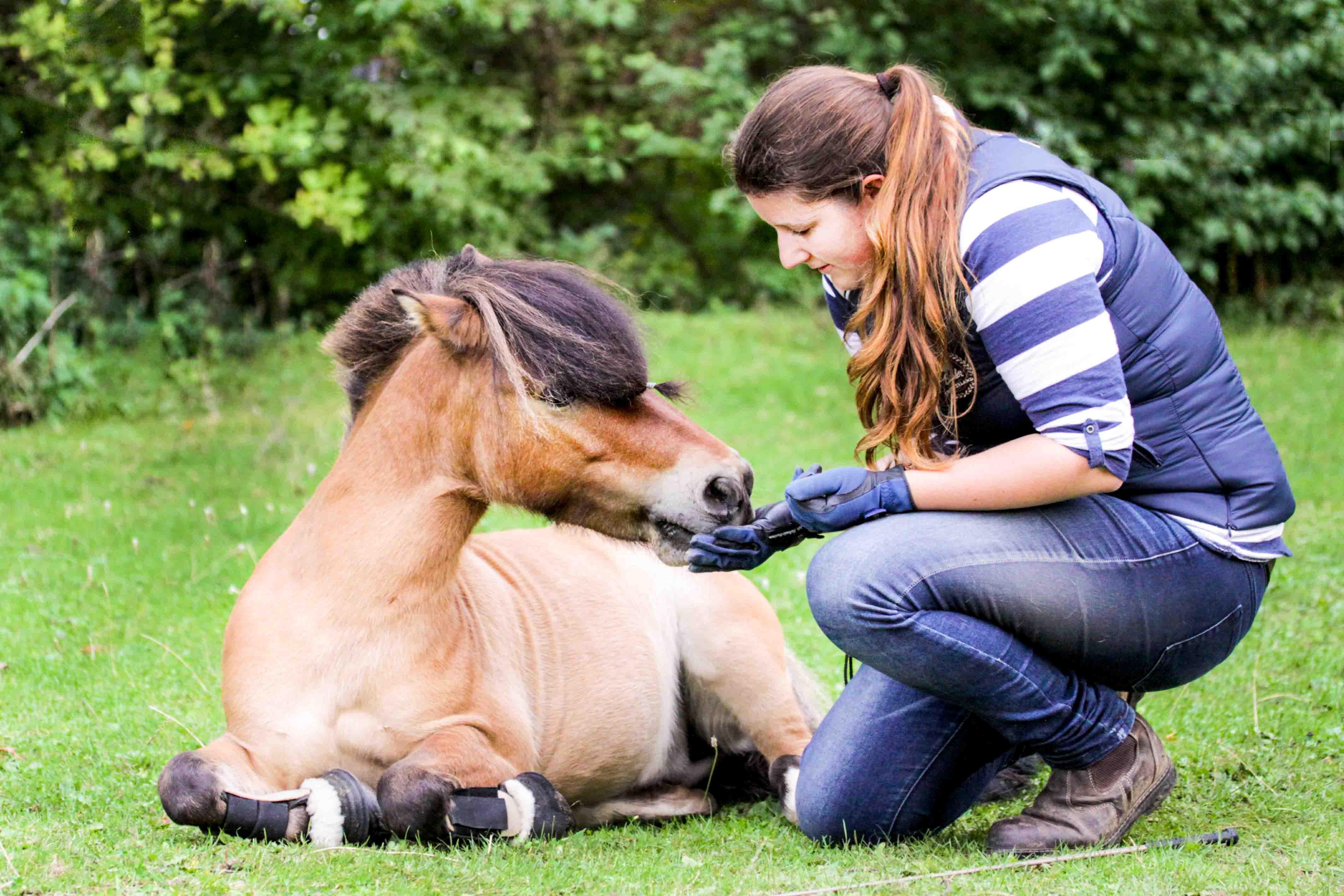 Pferdeleckerlis selber machen